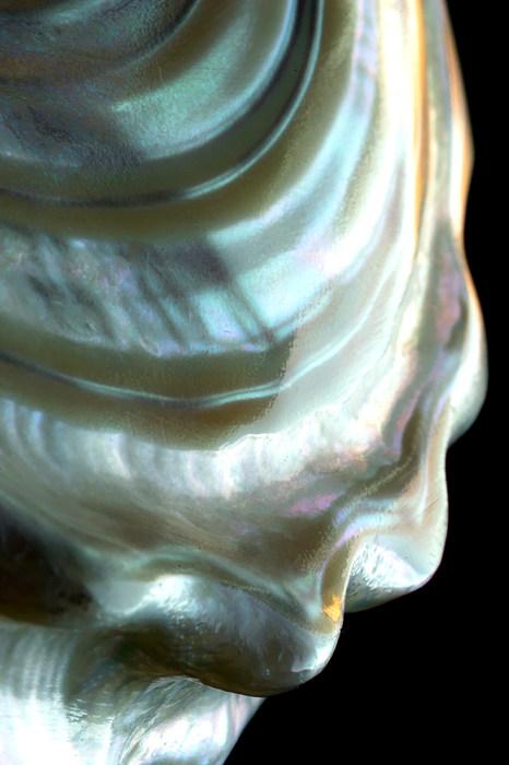Shell - CC Flickr © Tjarko Busink